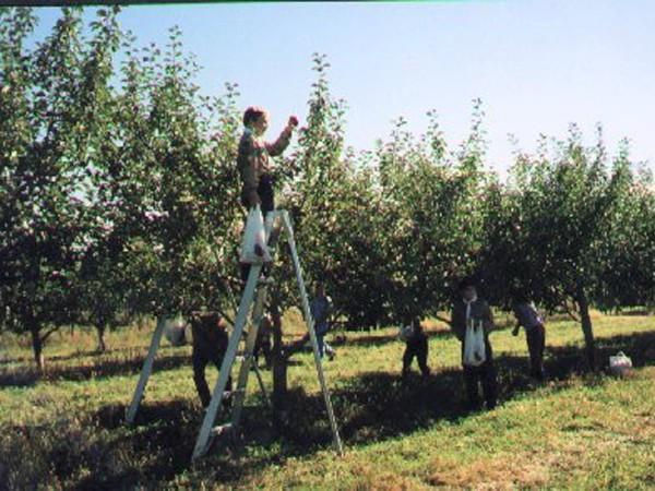 Site Likéo Cueillette de Pommes Échelle