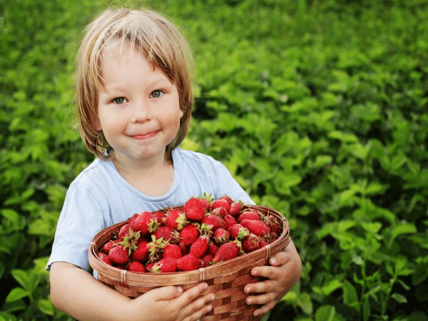 Little Boy Strawberry Basket 600x468