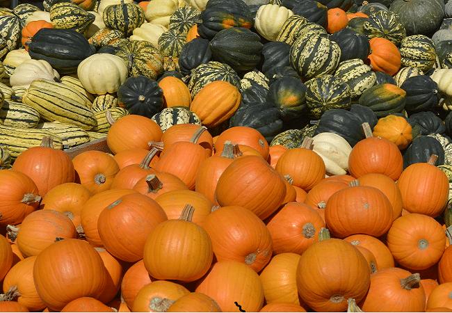 Pumpkin & Squash 600x450